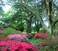 exbury_gardens_359_jpg_c185x165