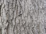 tree-wood-texture-7