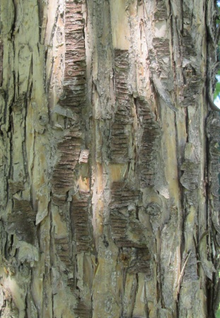 Bark Detail 1MB