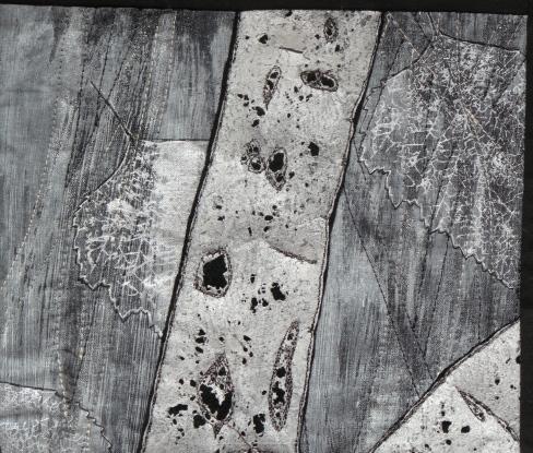 detail Betula Pendula