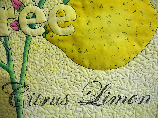 lemon-tree-close-up-1