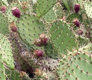 original-cactus-photo